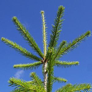 drzewka3