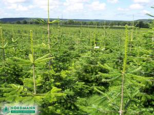 plantacja1_1024x768