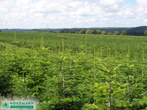 plantacja3_1024x768